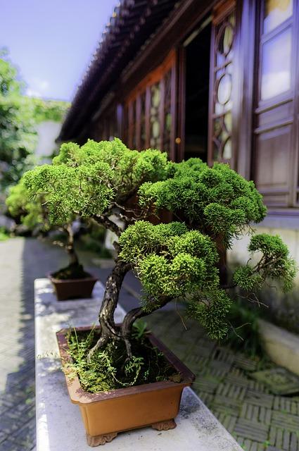 Pielęgnacja drzewka bonsai