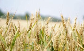 Obowiązkowe i opcjonalne ubezpieczenie rolnicze