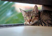 karma dla kotów sterylizowanychkarma dla kotów sterylizowanych